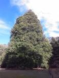 Pilot Hill Arboretum