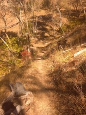 Single track MTB trail